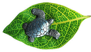 From Bali Lets Save the sea turtle kesian.com