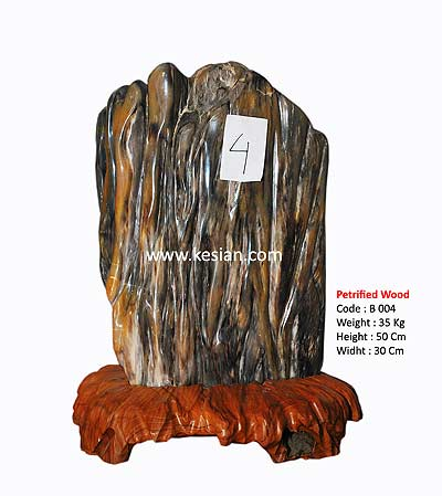 Indonesian Petrified Wood Fossils
