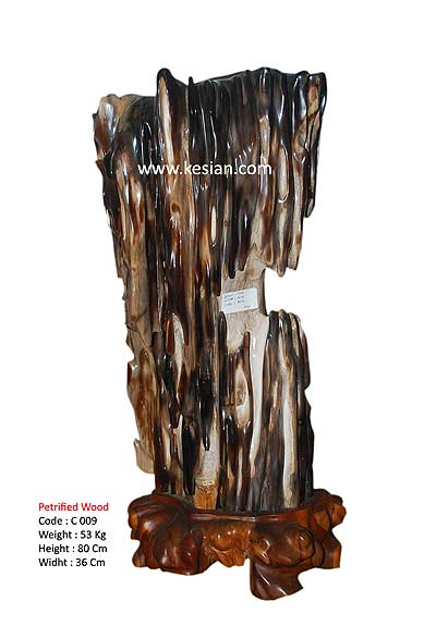 Petrified Wood for sales